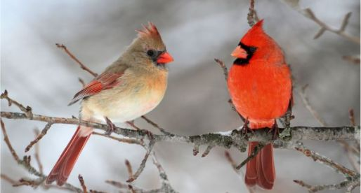 Chilly Days for Snow Birds: The Effects of the Falling Canadian Dollar