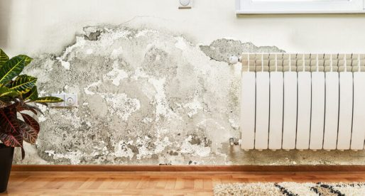 3 Scary Facts about Mold and How to Get Rid of It
