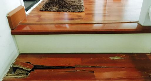 5 Ways to Repel Termites and 5 Ways to Get Rid of Them