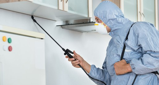 Pest Control: 6 Home Maintenance Tasks Before Moving into Your New Home