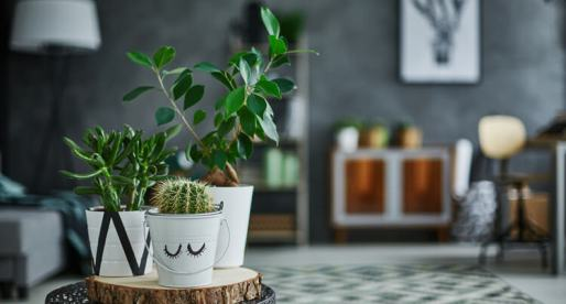 7 Houseplant Trends for 2020