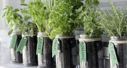 10 Edible Plants That Are Quick and Easy to Grow in Your Garden