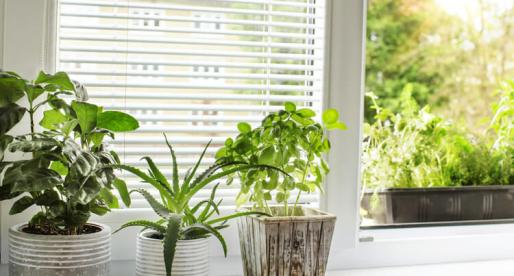 9 Plants with Amazing Health Benefits You Can Grow at Home