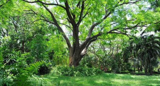 Here Are 10 More Trees that Can Ruin Your Yard