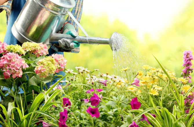 8 Tips to Create a Water-Efficient Garden