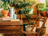 Balcony Privacy: Best Plants to Grow as Privacy Screens