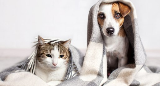 Living with Pets? Here's How to Keep Allergies Under Control