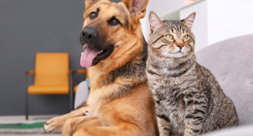 7 Ways to Make Your Home (More) Pet-Friendly
